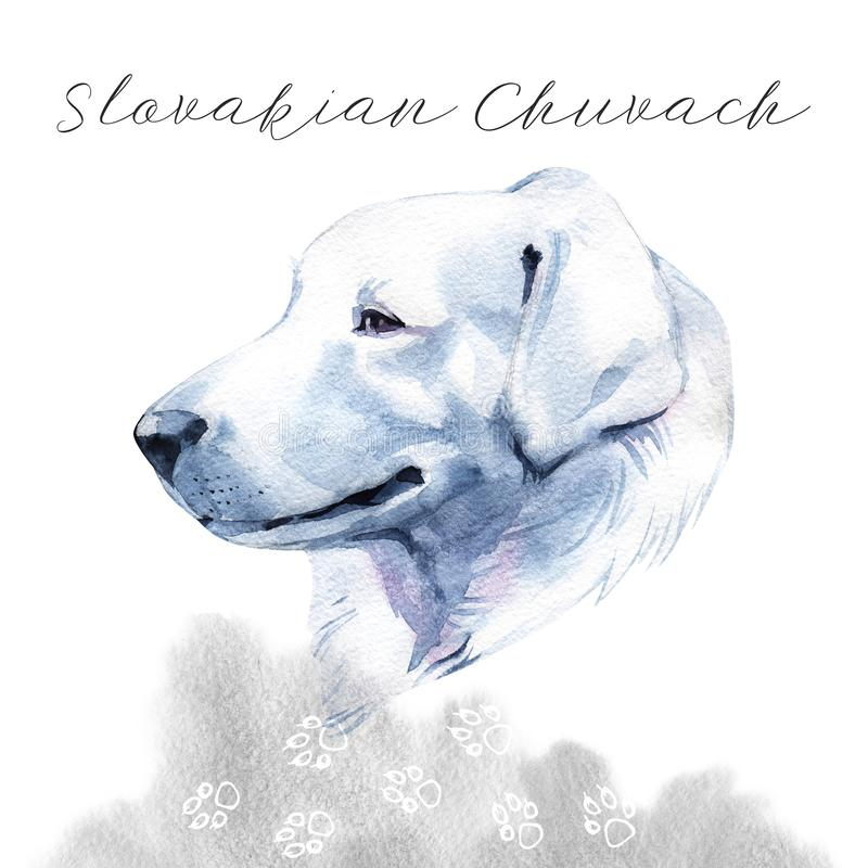 Slovakian Chuvach. Slovak cuvac dog breed with long fur digital art. Watercolor portrait close up of domesticated animal. Sticking out tongue, hand drawn doggy stock photography