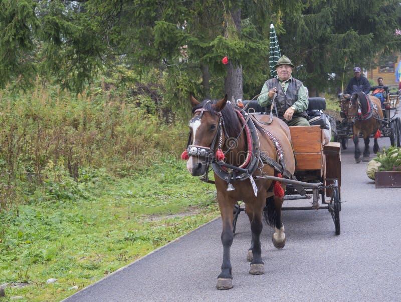 Slovakien högt Tatra berg, Strbske Pleso, September 15: Gamala män i hatt med hästen i traditionell utdragen carri för sele och f royaltyfria bilder