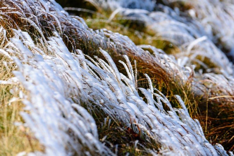 Slovakiska carpathian berg i höst frostigt gräs på toppmöte arkivfoto