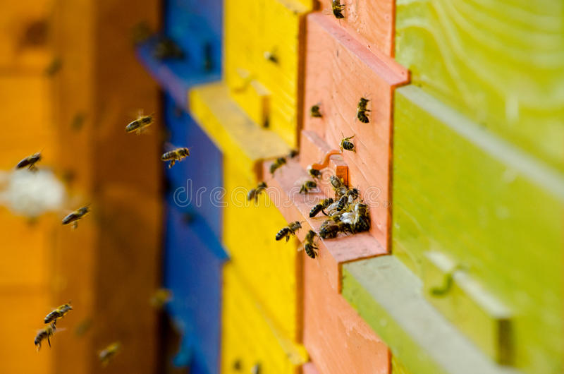 Slovenian Bee Hive. A colourful bee hive in Lake Bled royalty free stock photography