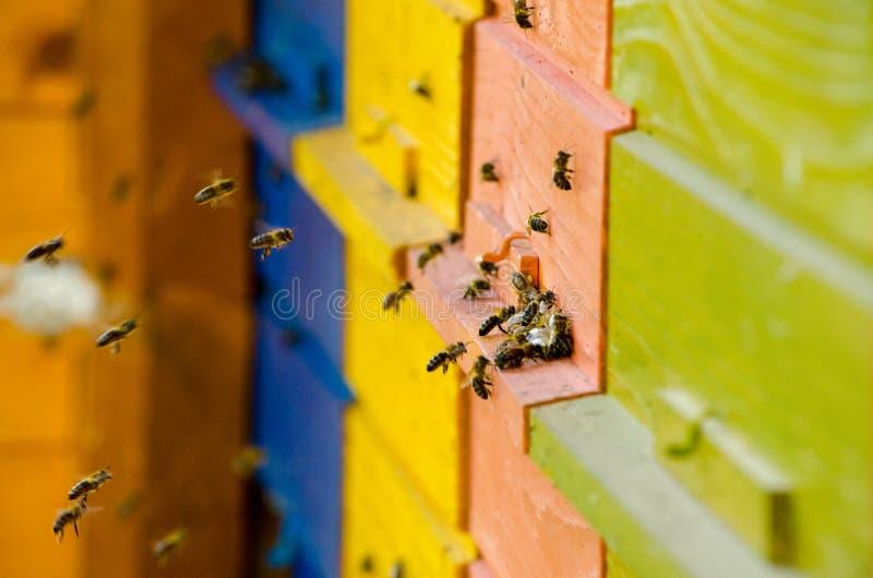 Slovenian Bee Hive royalty free stock photography