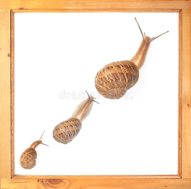 Slow Growth. Three snails from small to big illustrate sluggish growth royalty free stock image