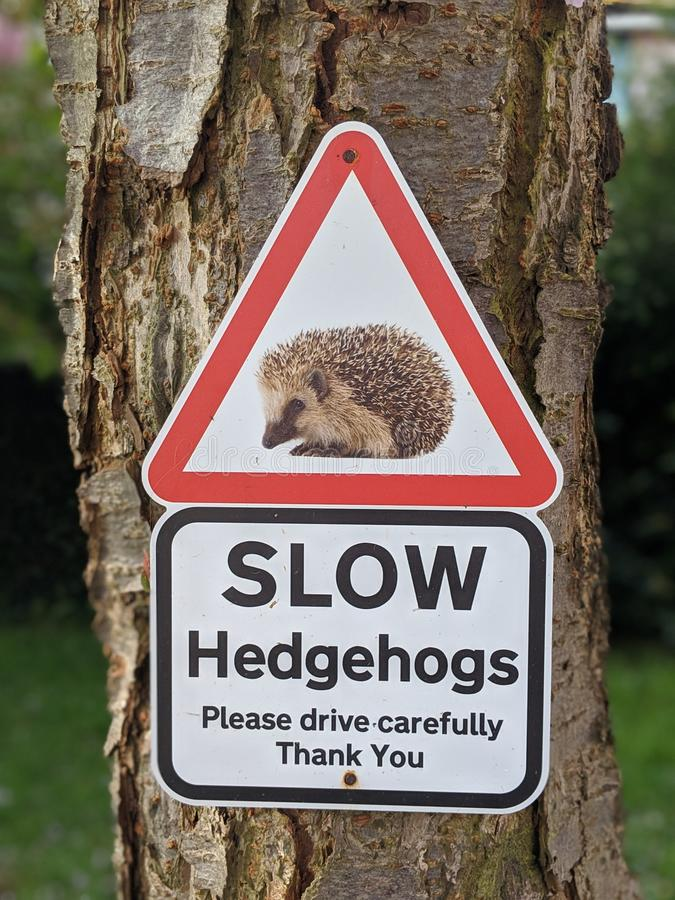 Slow Hedgehogs Crossing Sign stock image