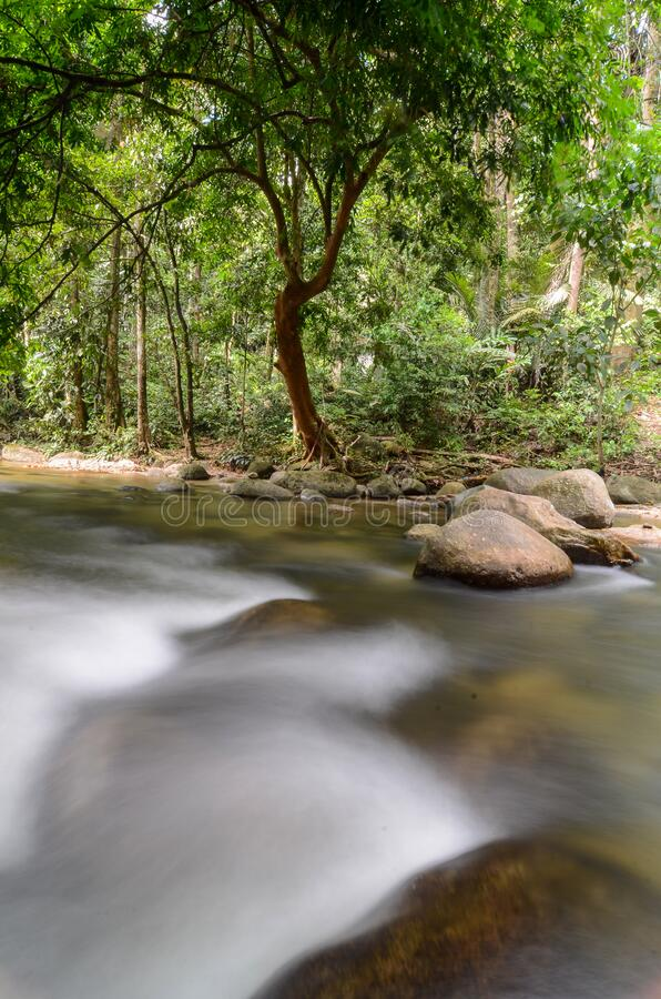 Slow motion water flow at rainforest. Slow motion water flow at Sungai Sedim rainforest royalty free stock images