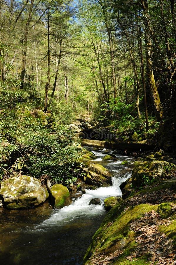 Free Slow Moving Creek Royalty Free Stock Image - 11728206