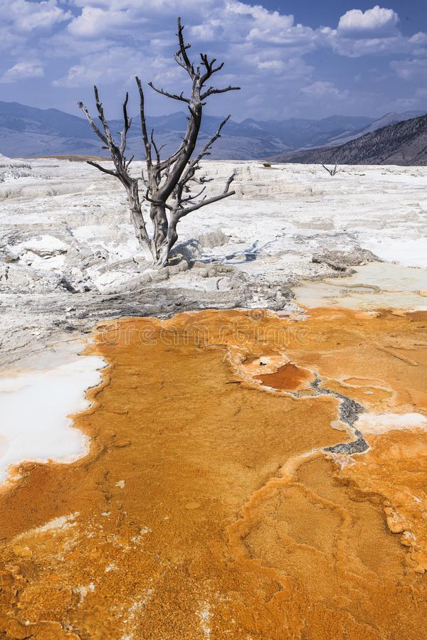Mammouth Hot Springs of Yellowstone stock photography