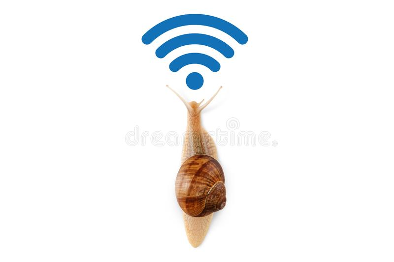 Slow Wi-Fi connection, the concept of speed in the modern network Internet data transfer, run snail isolated on white background stock image