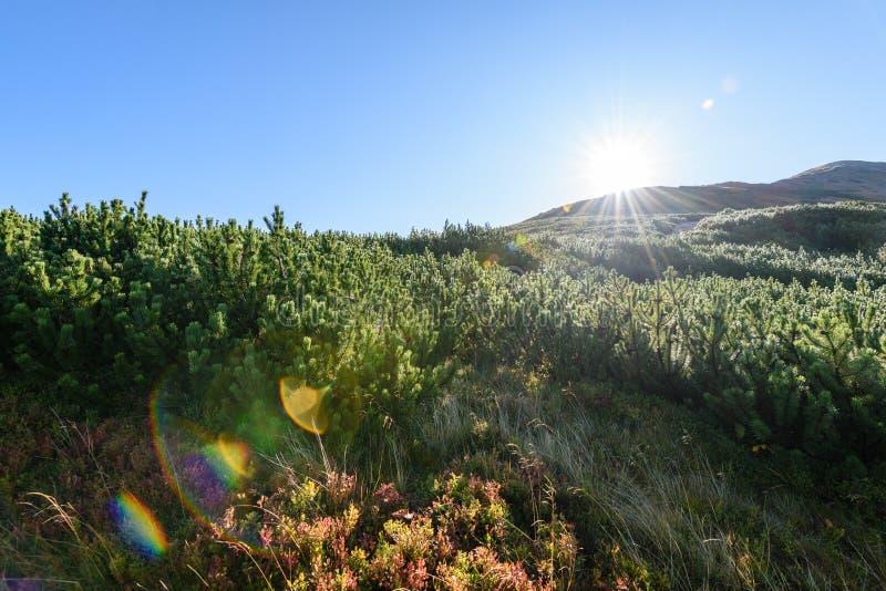 Download Slowakische Karpatenberge Im Herbst Sonnige Bergkuppen In Der Summe Stockbild - Bild von felsen, field: 106800733