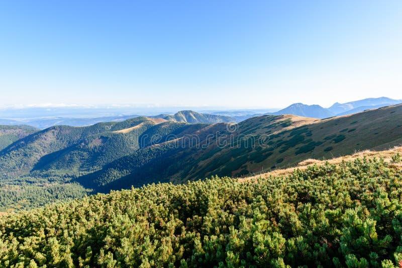 Download Slowakische Karpatenberge Im Herbst Sonnige Bergkuppen In Der Summe Stockfoto - Bild von gras, landschaft: 106800776