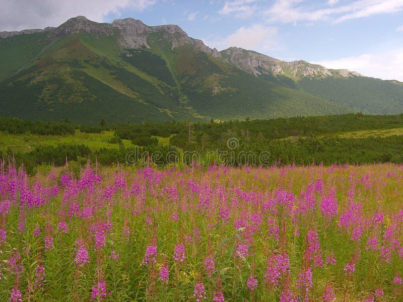 Slowakisches Tatras lizenzfreie stockfotos