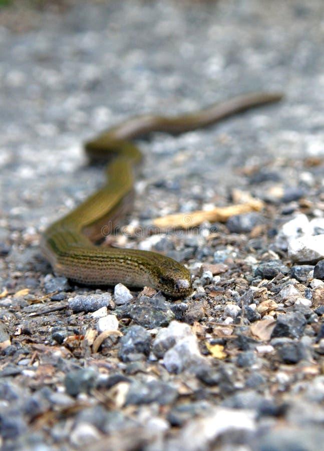 Slowworm στο δρόμο στοκ εικόνες με δικαίωμα ελεύθερης χρήσης