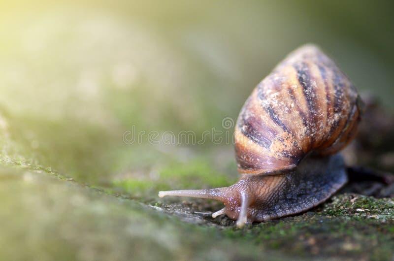 Slug or snail crawling slowly in the garden royalty free stock photo
