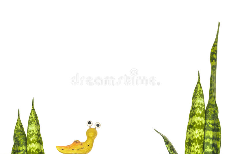 Slug. Stems sansevieriya and figurine garden snail (slug) creeping on a white background royalty free illustration