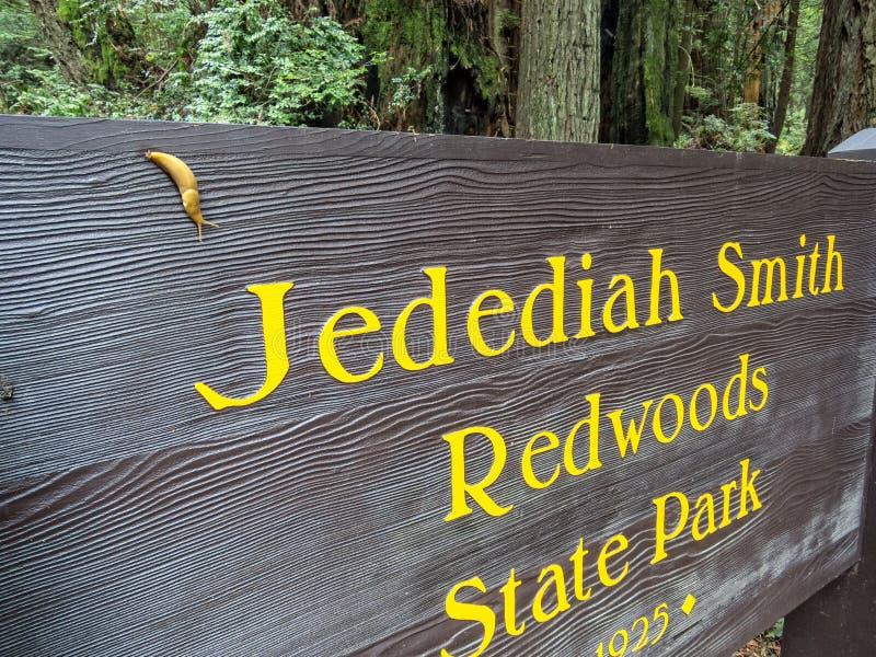 Slug welcomes you to the Redwoods stock photo
