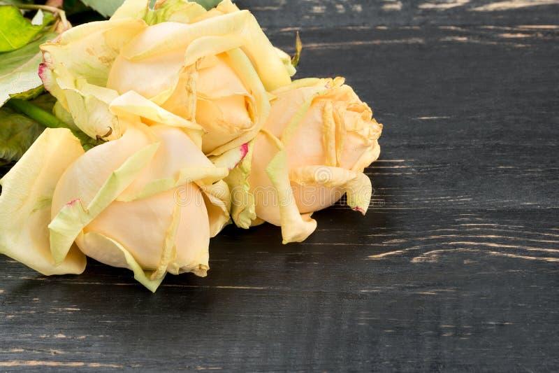 Sluggish Yellow Roses. Three sluggish yellow rose on a wooden background, closeup stock photo
