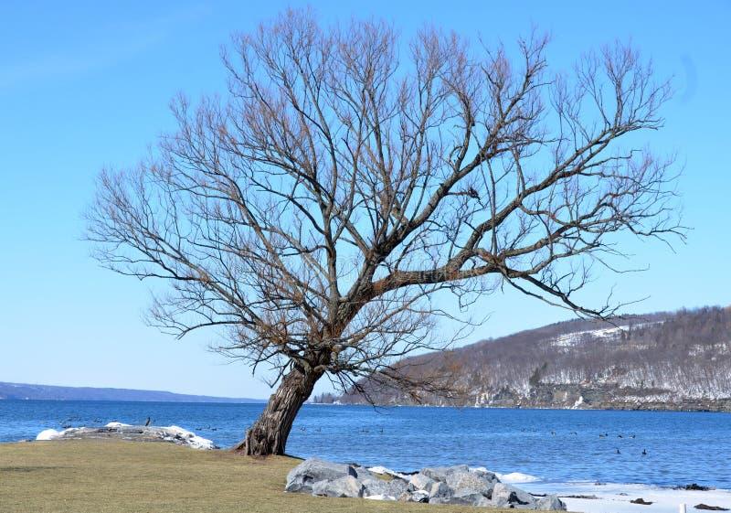 Sluimerende boom in de winter op Watkins-Nauwe valleihaven royalty-vrije stock fotografie