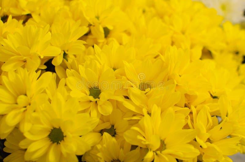 Sluit bloemen kleurrijke bloeien omhoog het als achtergrond in tuin stock afbeelding