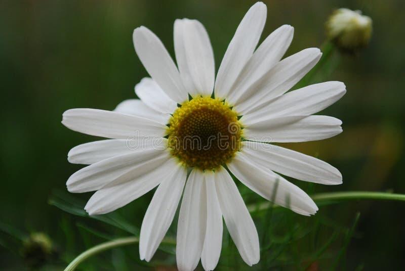 Sluit de Foto van White Petaled Flower royalty-vrije stock foto's