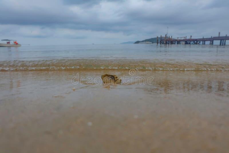 Sluit doorbroken shell op tropisch strand in koh mak eiland royalty-vrije stock foto's
