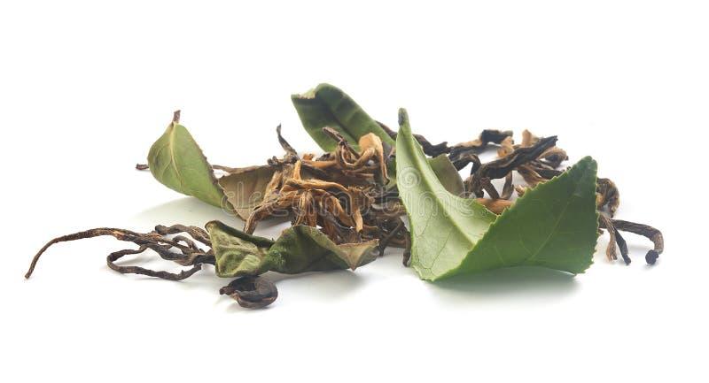 Sluit fesh omhoog groene theebladen met ochtendgloed stock fotografie