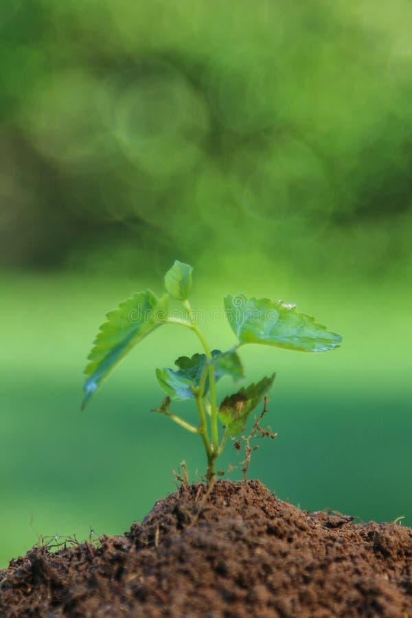 Sluit jonge plant omhoog het groeien royalty-vrije stock afbeeldingen