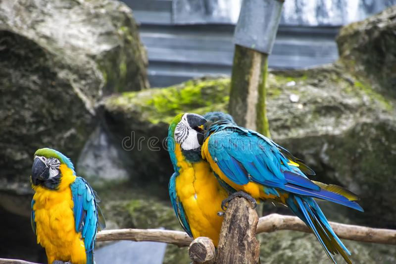 Sluit macore omhoog vogel royalty-vrije stock afbeeldingen