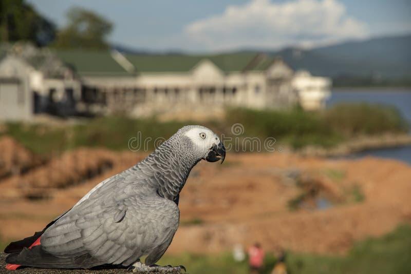 Sluit macore omhoog vogelpapegaai op vage achtergrond royalty-vrije stock foto