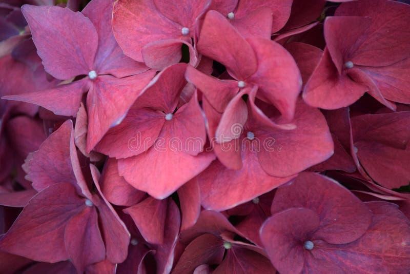 Sluit mening die van roze/purpere bloemen in een tuin omhoog groeien stock fotografie