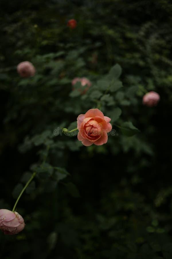 Sluit mooie oranje steeg royalty-vrije stock afbeeldingen