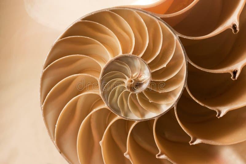 Sluit nautilusshell omhoog patroon stock afbeeldingen