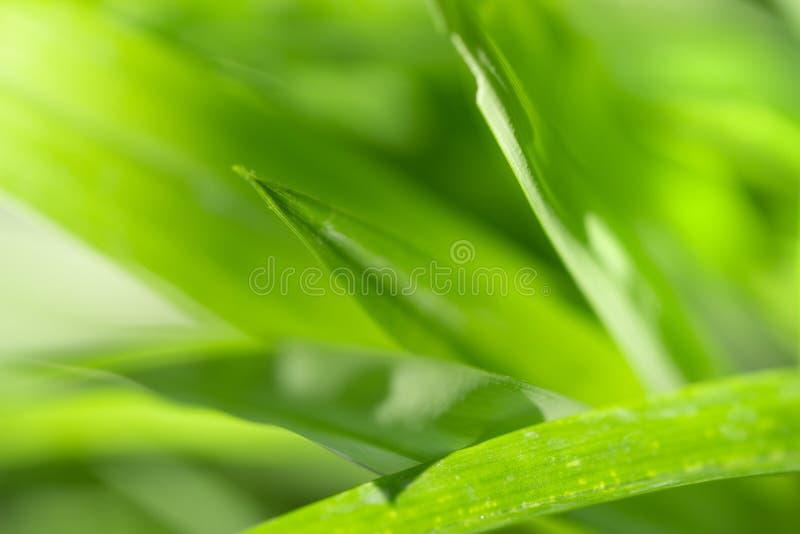 Sluit omhoog aardmening van groen blad royalty-vrije stock foto