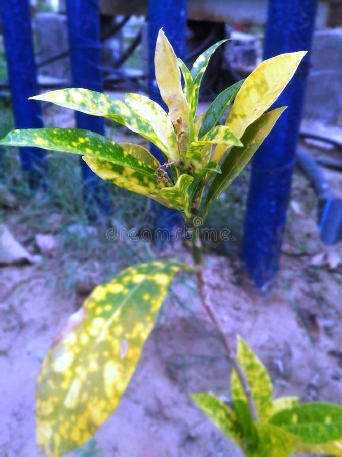 Sluit omhoog beeld van gele in de schaduw gestelde bladeren stock afbeelding