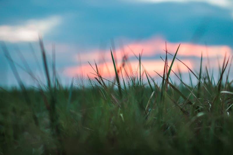 Sluit omhoog beeld van gras met een mooie zonsondergang royalty-vrije stock afbeeldingen