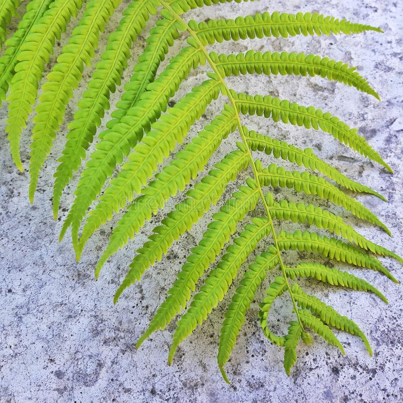Sluit omhoog beeld van groen varenblad op steenachtergrond royalty-vrije stock foto