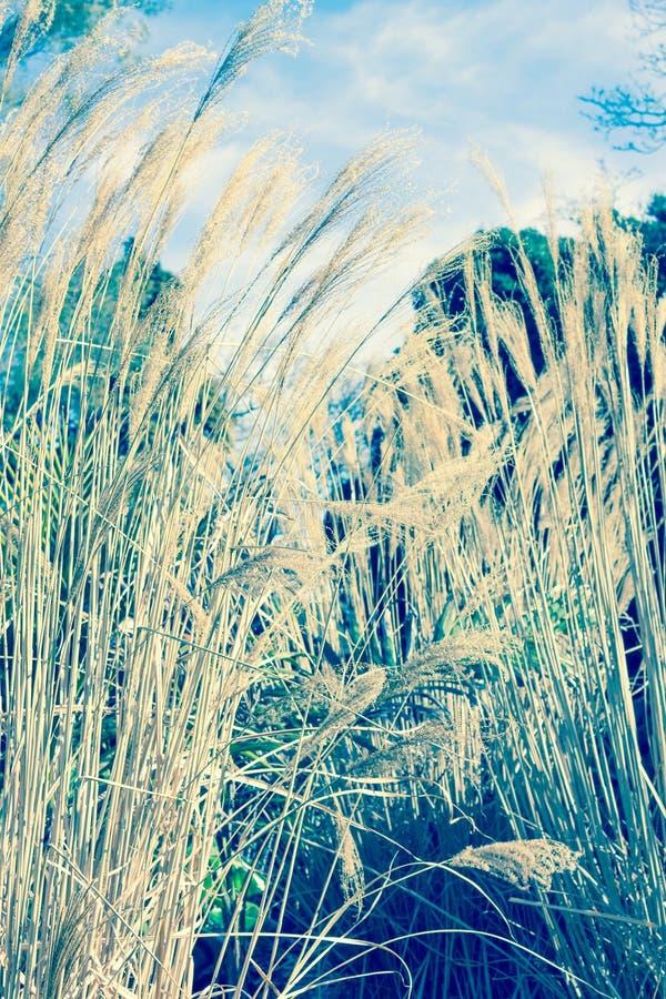 Sluit omhoog beeld van lange grassen royalty-vrije stock afbeeldingen
