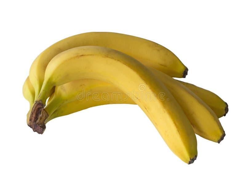 Sluit omhoog bos van bananen die op witte grote rijp worden geïsoleerd als achtergrond stock afbeelding