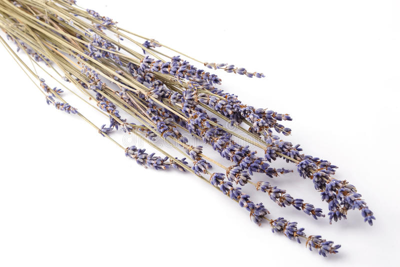 Sluit omhoog bos van lavendel stock afbeeldingen