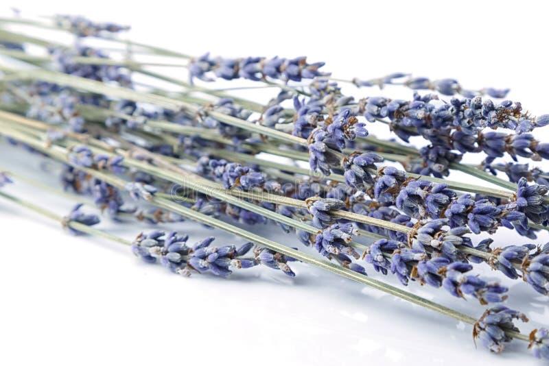 Sluit omhoog bos van lavendel royalty-vrije stock afbeelding