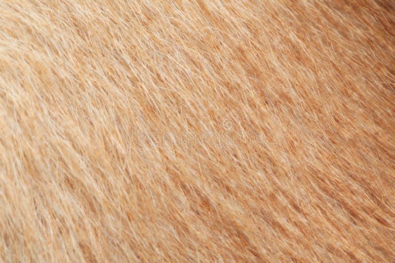 sluit omhoog bruine hondhuid voor achtergrond stock afbeelding
