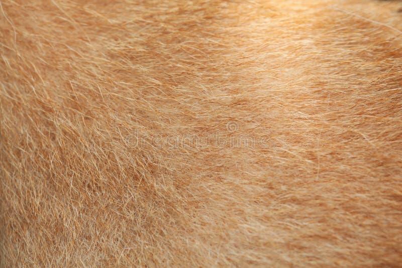 sluit omhoog bruine hondhuid voor achtergrond stock foto