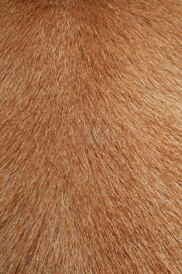 sluit omhoog bruine hondhuid voor textuur royalty-vrije stock afbeeldingen