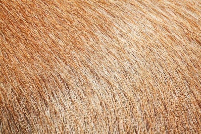 sluit omhoog bruine hondhuid voor textuur stock fotografie