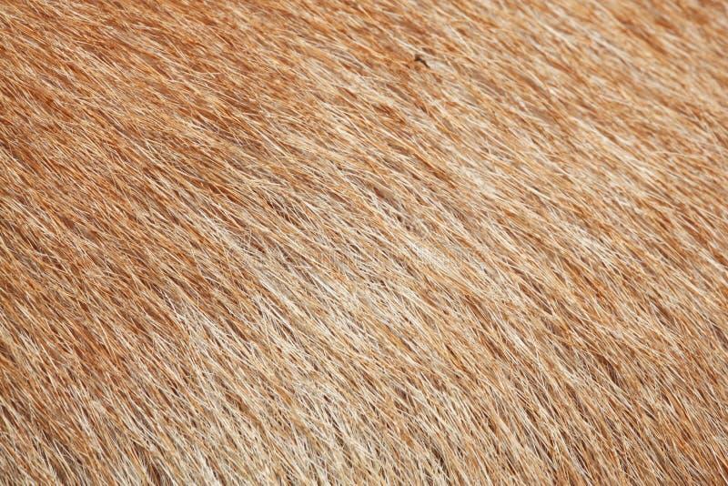 sluit omhoog bruine hondhuid voor textuur stock afbeelding