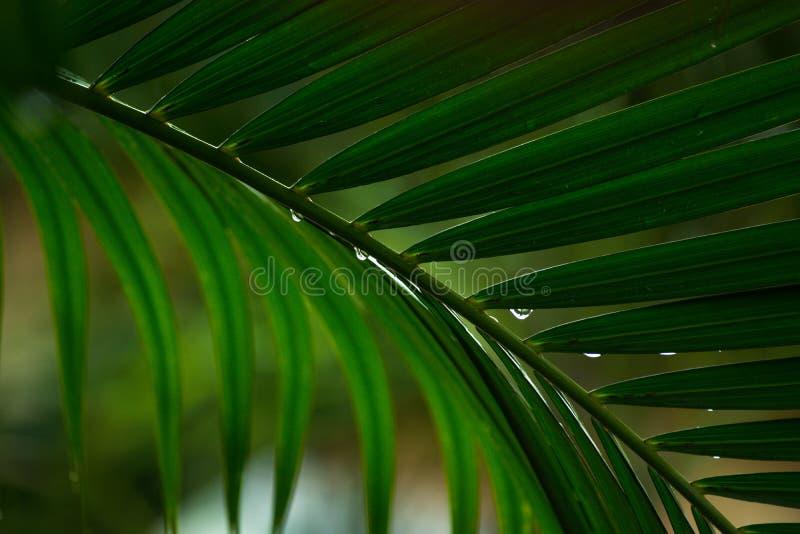 Sluit omhoog de bladeren van palmen stock foto's