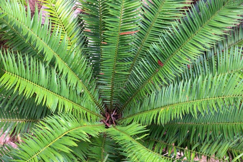 Sluit omhoog de bovenkant van palm stock foto