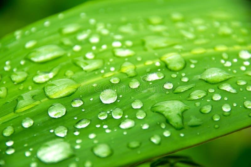 Sluit omhoog de daling van de waterregen op groen blad voor de achtergrond van de aardtextuur royalty-vrije stock afbeelding