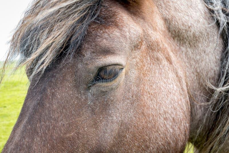 Sluit omhoog de hoofdmanen van het paardoog stock fotografie