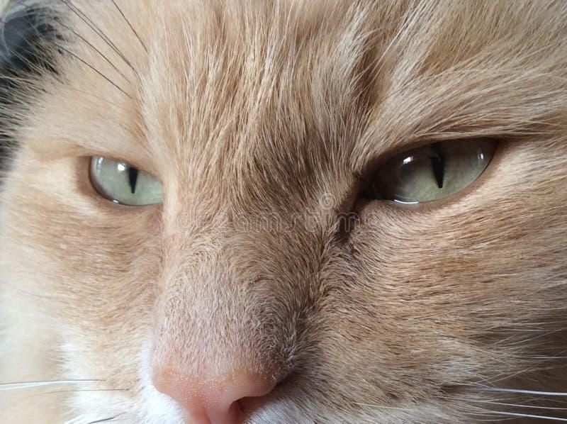 Sluit omhoog de ogen van de kat royalty-vrije stock fotografie