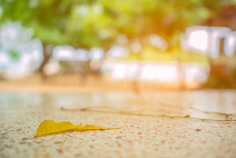 Sluit omhoog Droge bladdaling van de boom aan de steenlijst stock foto's