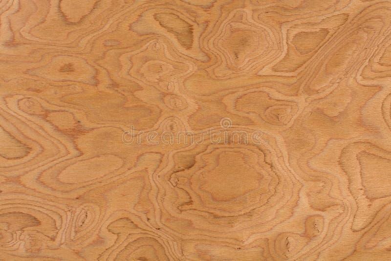Sluit omhoog echte de textuurachtergrond van de okkernoot burl houten korrel stock fotografie